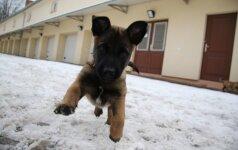 Pasieniečiai sulaukė labai mielo pastiprinimo: parodė naujus tarnybinius šuniukus