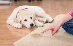 Kaip pripratinti šunį prie švaros