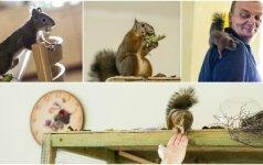 Neįprastas augintinis: išgelbėtas voveriukas pakeitė vilniečių gyvenimą