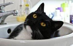Kaip susitvarkyti su nemaloniais šunų ir kačių kvapais