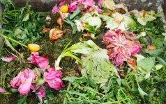 Priežastys, kodėl reikia kompostuoti