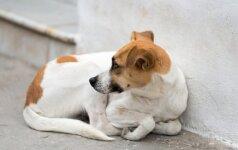 Šuns atsidavimas spaudžia ašarą