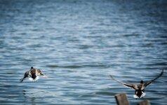 Būkite atidūs: ne visose maudyklose švaru maudytis
