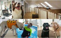 Supras ne kiekvienas: viešbučiuose šunų laukia