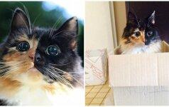 Akla dviveidė katytė savo grožiu užbūrė pasaulį