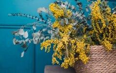 Interjero dizaino instagramo profiliai, kurie įkvėps namuose susikurti pavasarišką nuotaiką