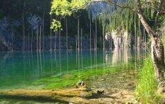 Gamtos stebuklai: paskendęs miškas Kaindy ežere