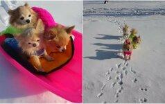 Šie šuniukai atsisveikinti su žiema dar nenori: pasigrožėkite jų linksmybėmis sniege