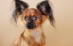 Kaunietis apstulbo: pirko grynaveislį šunį – išaugo mišrūnas