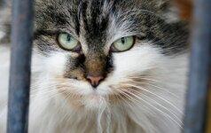 Katės šėrimo grafikas: kokių klaidų nedaryti