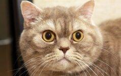 Kodėl bent kartą gyvenime reikia apspjauti katę?