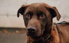 "Filmo ""Šuns tikslas"" kūrėjai kaltinami žiauriu elgesiu su gyvūnais"