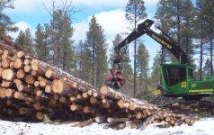 Aplinkosauga iš arti. Ar įmanoma kirsti mišką ir nekenkti gamtai?