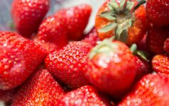 Laukiantiems lietuviškų braškių – prastos naujienos