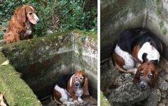 Šuo savaitę laiko saugojo į bėdą pakliuvusį draugą