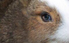 Po triušiuko nukankinimo – teisėjos reakcija: kas gresia už žiaurų elgesį su gyvūnu?