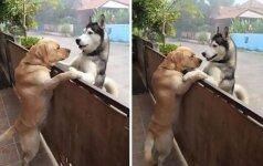 Graudinanti keturkojų draugystė: neišskiriami šunys stebina net jų šeimininkus