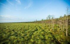 Mokslininkai nustatė, kada ledynmečio Europoje atsirado miškai