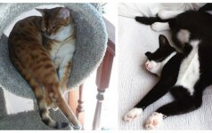Juokingiausios kačių miego pozos