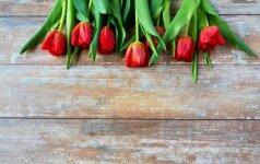 15 gudrybių, kad skintos gėlės ilgiau džiugintų