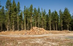"""""""Baltijos miškai 2012"""" pasirengę startui"""