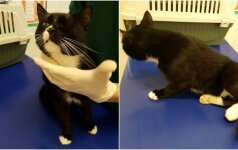 Nesuvokiamas žiaurumas: į veterinarų rankas pateko apšaudytas katinas