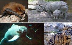 7 unikalios gyvūnų rūšys, kurios išnyko per pastarąjį dešimtmetį