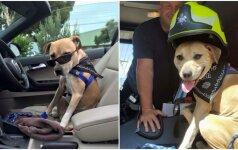 Labai jautri istorija: šeimininkai pasirūpino, kad paskutinės šuns dienos būtų nepamirštamos