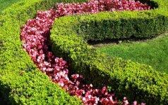 Kaip sodinti, formuoti ir prižiūrėti gyvatvores. 2 dalis