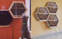 Reikėjo drąsos: namų duris atvėrė bičių aviliui
