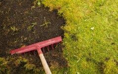 Kaip prižiūrėti kiemą, kad jo neužgožtų samanos ir piktžolės?