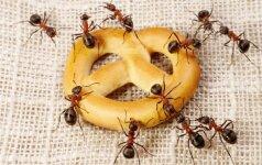 Patarimai, nesusitvarkiusiems su skruzdėmis