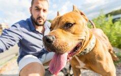 Kiek šuns veislė lemia jo elgesį