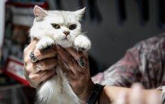 Žavingos kačių parodos dalyvės: tik pažiūrėkite, kokios jos mielos