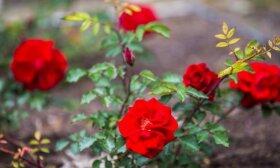 Balandžio darbai sode – kaip pasirūpinti vaismedžiais ir dekoratyviniais augalais