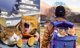Šioms katėms pasisekė: išgelbėtos iš prieglaudos, leidosi į nepamirštamą kelionę