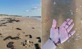 Palangos paplūdimį nusėjo dumbliai: tenka traukti ir iš plaukų, ir iš maudomuko