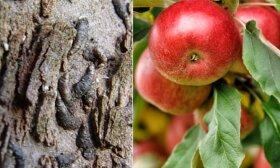 Amšiejus apie netikėtus būdus naikinti sodo kenkėjus
