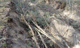 Miškovežiai suniokojo tūkstančio metų Girežerio piliakalnį
