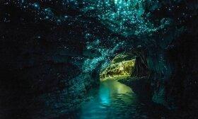 Vaitomo jonvabalių urvai Naujojoje Zelandijoje / Naujosios Zelandijos turizmo informacijos centro nuotr.