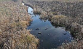 Draustinyje užfiksavo liūdną reginį: pilnas upelis padangų