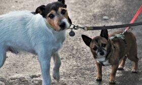 Privalomasis šunų, kačių ir šeškų ženklinimas: kokios naudos turės gyvūno savininkas?