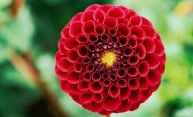 VU Botanikos sodas