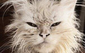 Psichologė pateikia kitą versiją apie kasdienę emociją - pyktį