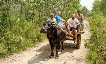 Paskutiniai M. Starkaus ir V. Radzevičiaus Indijos kilometrai įveikti buivolo traukiamu vežimu