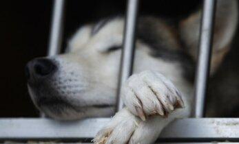 Veterinarė apstulbusi: šuo buvo taip sumuštas, kad nugaišo ant rankų