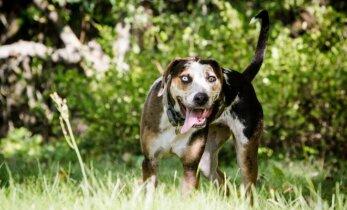 Naujovė Lietuvoje: mokomoji programa, kaip saugiai elgtis su šunimis