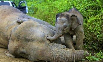 Gyvūnai irgi verkia... Kaip netektis išgyvena skirtingos rūšys