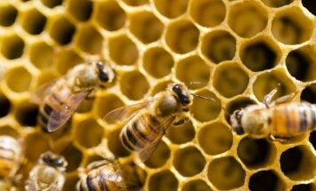 Parodoje bus pristatomos lietuviškos bitininkystės tradicijos