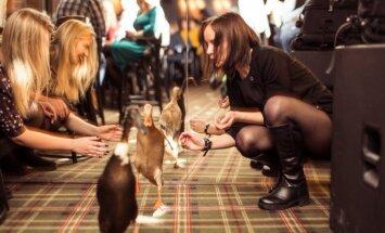 Netikėtumas sostinės baro gimtadienyje – tarp išsipusčiusių svečių lakstė antys